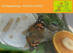 Wurzelkinder: Plätze frei! Schmetterlinge geschlüpft…